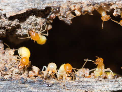 Melbourne Termite Control