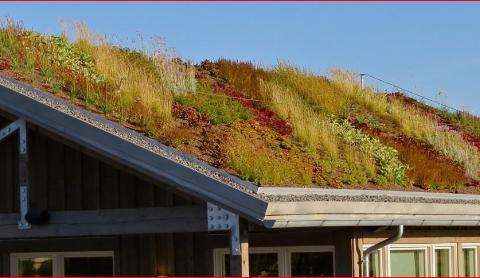 Green Roof Sydney